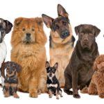 Comment choisir de la nourriture pour votre chien préféré?