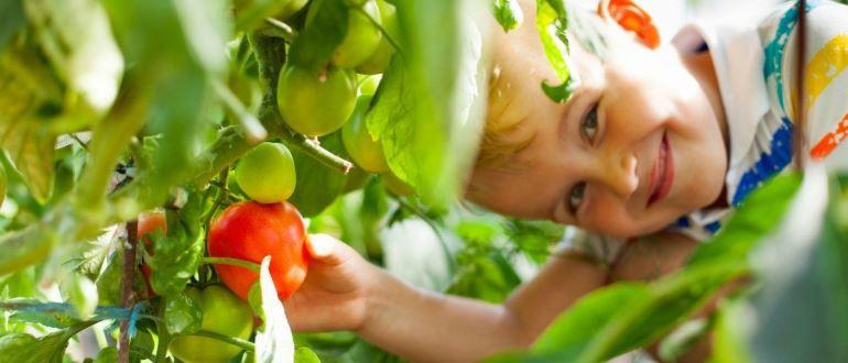 TOP 9 meilleures variétés de tomates ou de tomates