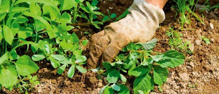 Comment traiter les mauvaises herbes et l'herbe sur le site?