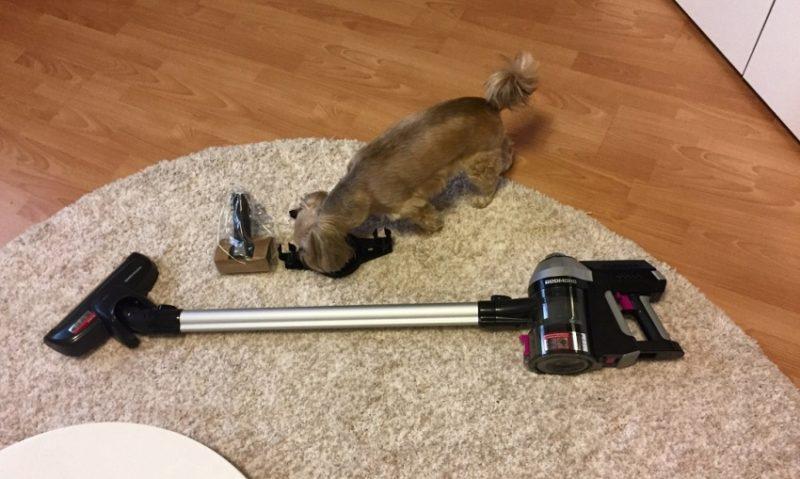 Aspirateur tapis et chien